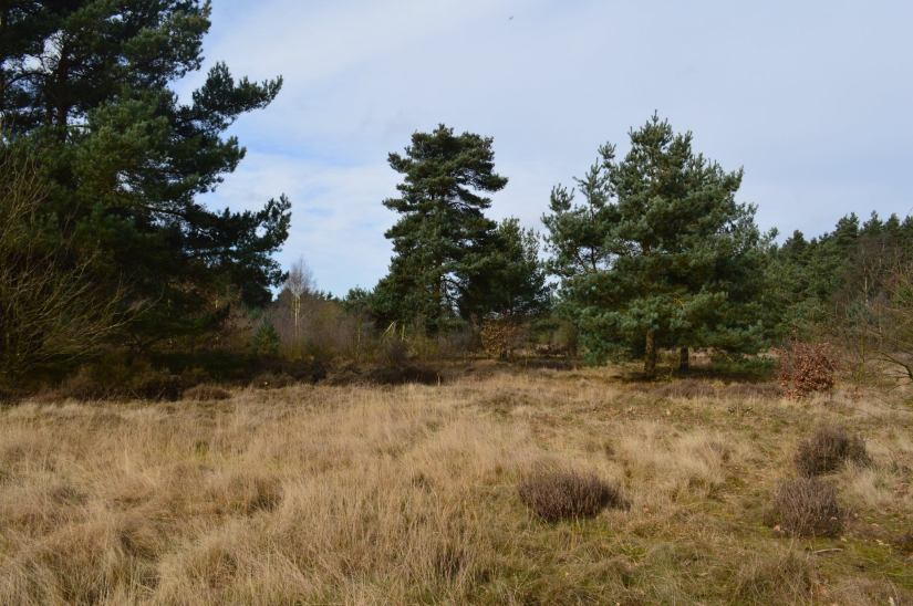 Heathland management at Budby
